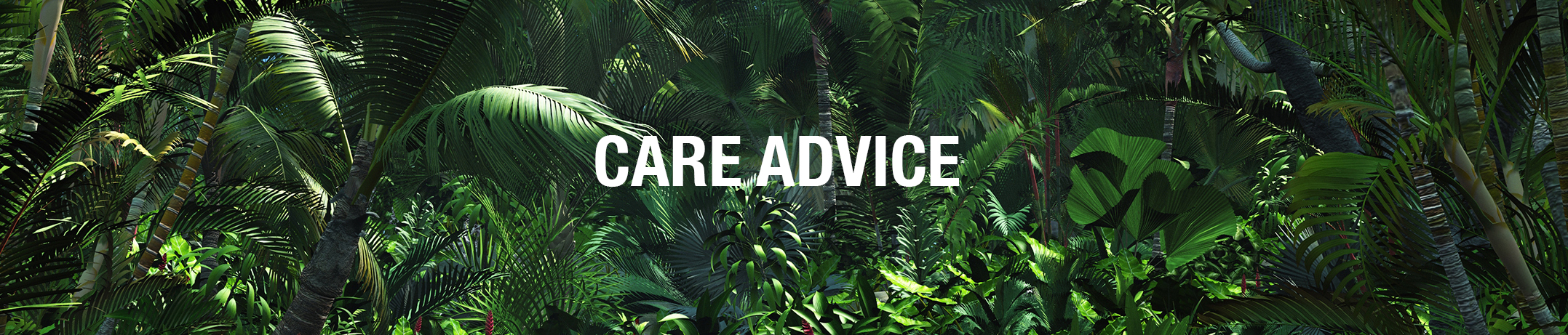 CARE ADVICE MALUNE